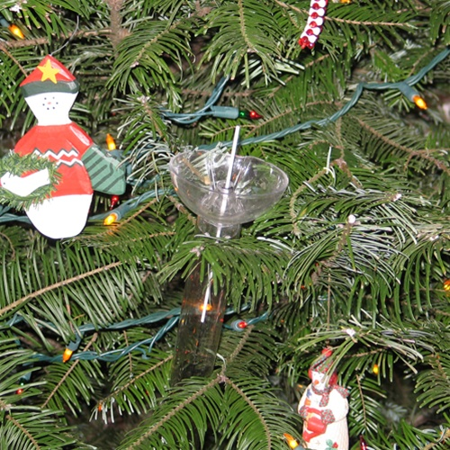 28 Best Water For Real Christmas Tree Stay Real