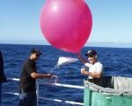 8233 Weather Balloon, 100 Grams Red