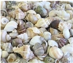 Assorted Seashell Mix (1 pound bag)