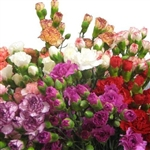 Assorted Pack - Mini Carnations - 160 stems (Red,White,Pink,Novelty Colors)
