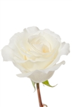 "MT Everest White Rose 20"" Long - 100 Stems"