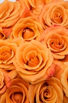 "Orange Unique Orange Rose 20"" Long - 100 Stems"