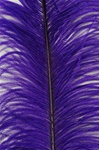 "19-24"" Ostrich Feathers - Purple (Pack of 12)"