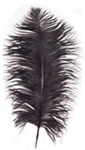 "17-21"" Ostrich Feathers - Black (1/2 Pound)"