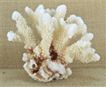 Brown Stem Coral - Small