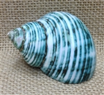 Polished Green Calico - (27mm) 1_1/16""