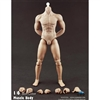 Boxed Figure: COO Models Hybrid Muscular Body (34006)