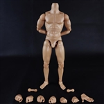 "Figure: COO Models Muscle Male Body 9.84"" (CM-BD009)"