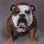 Dog: DiD British Bulldog (AS002C)
