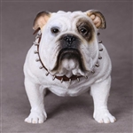 Dog: DiD British Bulldog (AS002D)