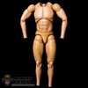 Figure: Hot Toys True Type Regular Body Caucasian W/Bulking Thighs (No Head, No Hands, No Feet)