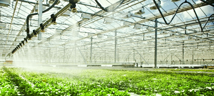 Greenhouse Irrigation & Watering Systems