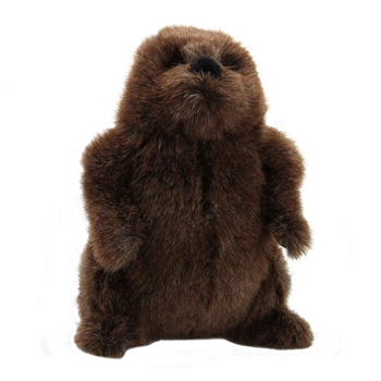 Chuckwood the Plush Groundhog by Douglas