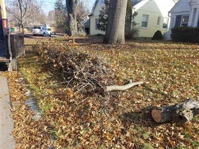 Tree, Brush Yard Waste Removal