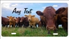 Beef Cattle Farm license plate personalized novelty Cows Farm Decorative Vanity car tag