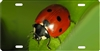 Lady Bug personalized novelty license plate Ladybug front plate