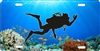 diver down coral reef scuba diver personalized novelty front license plate decorative vanity car tag