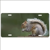 Squirrel personalized novelty front license plate decorative custom car tag
