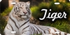 White Tiger novelty license plate Custom License Plates, Personalized License Plates, Decorative License Plates, Front License Plates, Car Tags, airbrush