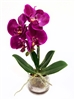 13 Inch Phalaenopsis Orchid Real Touch Artificial Flower