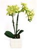 Phalaenopsis Orchid Real Touch Artificial Flower Arrangement with Ceramic Pot