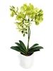 18 Inch Phalaenopsis Orchid Real Touch Artificial Flower