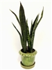 21 Inch Snake Plant Real Touch Arrangement