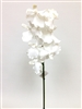 White Vanda Orchid Flower Stem