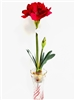 Red Amaryllis Spray