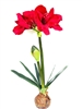 Red Amaryllis Topper