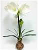 White Amaryllis Topper