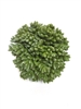 "4.5"" Boxwood Ball"