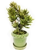"15"" Succulent Arrangement flowers Ceramic Pot"