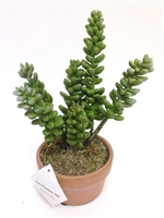 8 inch Succulent Arrangement Ceramic Pot