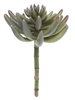 9 Inch Succulent Picks Stem