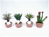 "Succulent Arrangements Set 4 -7""h-9""h"