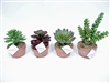 "Succulent Arrangements Set 4 - 5""h - 8""h"