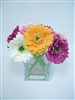 Colorful Daisy Flowers Arrangement
