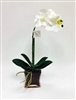 "21"" Phalaenopsis Orchid Real Touch Flower Arrangement - Glass Vase"