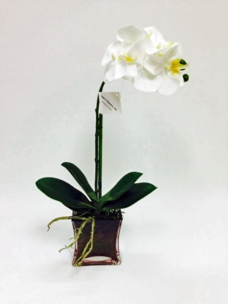 Phalaenopsis Orchid Real Touch Flower Glass Vase