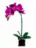 Orchid Real Touch Artificial Flower