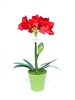 Amaryllis Arrangement Green Ceramic Pot