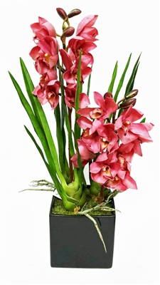 Purple Cymbidium Orchid