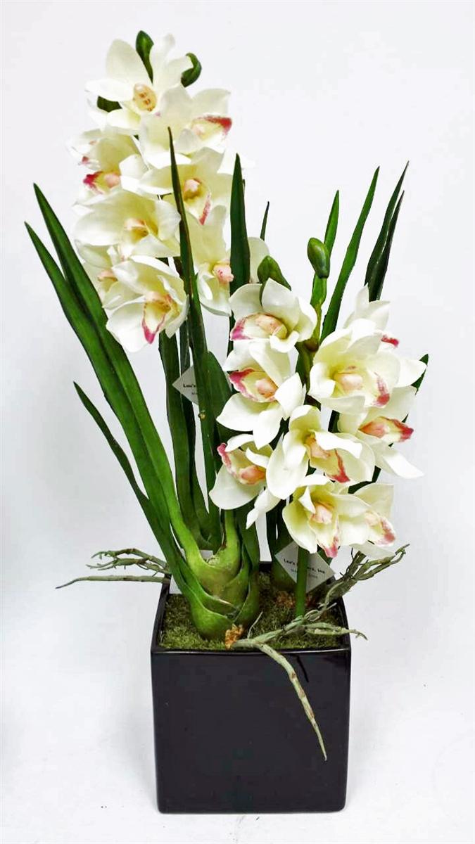 Get White Cymbidium Orchid Flower Pot