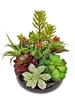 Mixture Of Colors Succulent Lifelike Arrangement - Ceramic Pot
