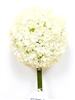 White Allium Spray