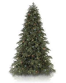 Portland Pine <span>|6.5'|Full 47"