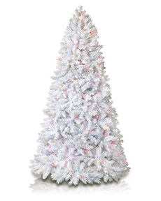 Winter White Christmas Tree <span>|8'|Full 52"