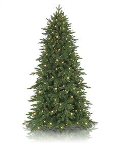 Addison Spruce <span>|9'|Slim 54"