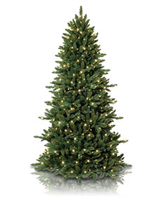 Slim Spruce Christmas Tree